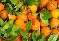 Названо количество мандаринов, опасное для здоровья