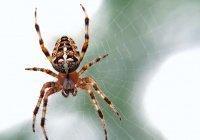 Смертельно опасных пауков заметили в российском регионе