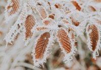 Оценен риск заразиться COVID-19 на морозе