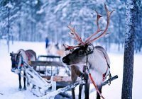 Названы наиболее популярные российские зимние курорты