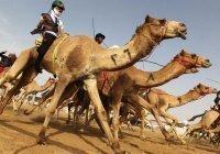 Верблюжьи бега из Ближнего Востока вошли в список наследия ЮНЕСКО