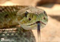 Жажда наживы и славы: как ловец змей попал в собственный капкан беспечности