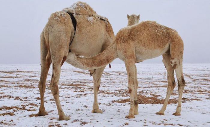 Снег в Саудовской Аравии (Источник фотографий: destinationksa.com)