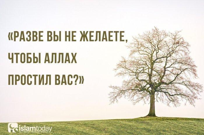 Разве вы не желаете, чтобы Аллах простил вас? (Источник фото: pixabay.com)
