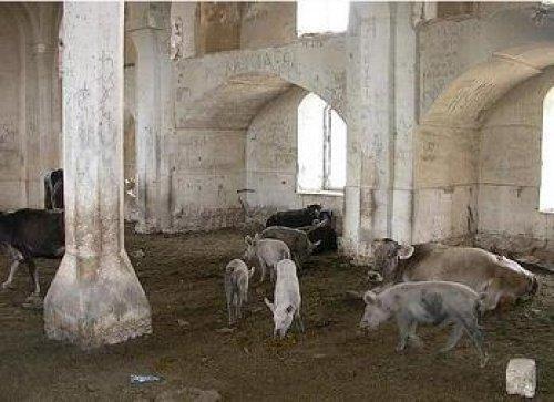 Свиноферма в мечети г. Агдам (освобожденная от армянской оккупации территория Азербайджана).