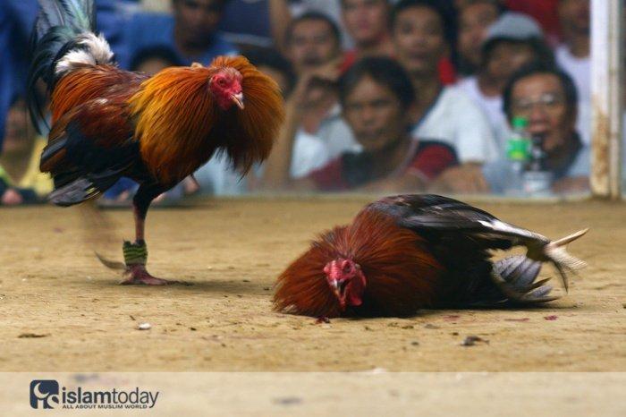 Как нельзя обращаться с животными? (Источник фото: phuket-fever.ru)