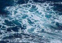 В Австралии случайно выловили морского «монстра»