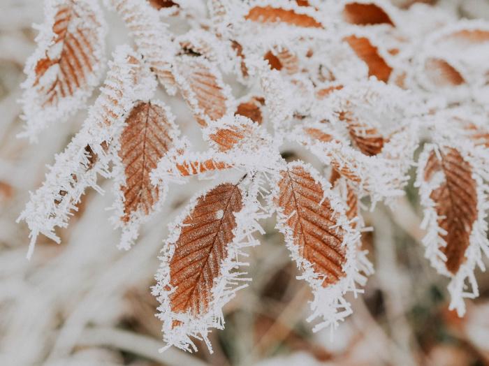 Морозы сказываются на распространении инфекции с точки зрения эпидемиологии