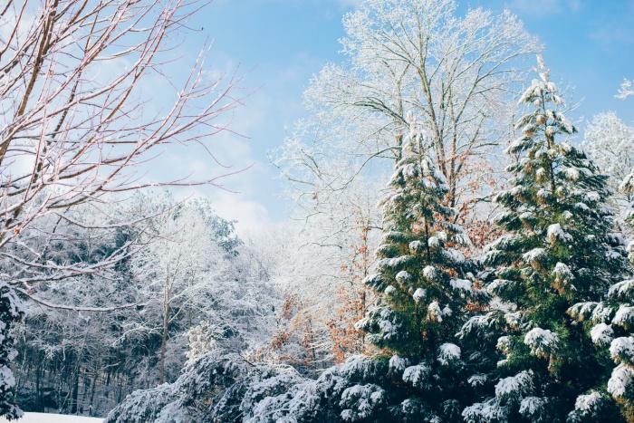 При этом в первой половине недели, говорит специалист, температура воздуха может опуститься до 30 градусов мороза и ниже