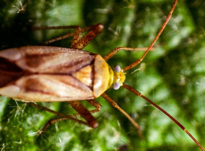 Периодическая активизация тараканов является частью цикла размножения этих насекомых