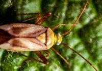 Россиян предупредили о скорой активизации тараканов