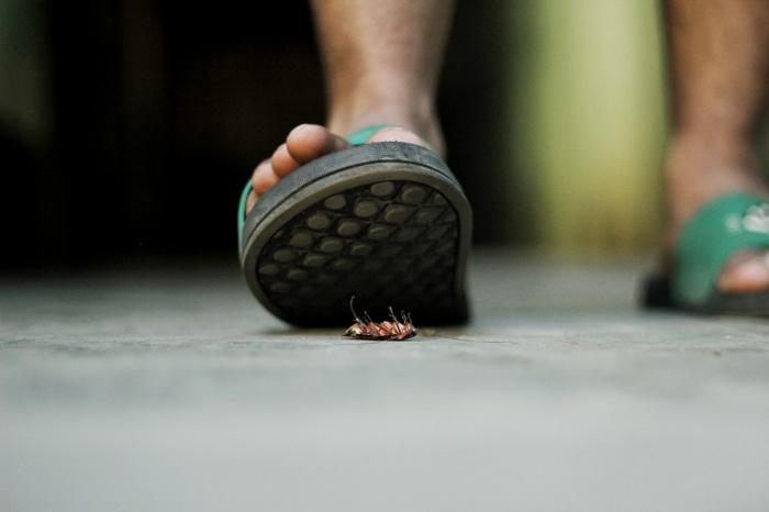Врач опроверг информацию о том, что тараканы активизируются в зависимости от времени года