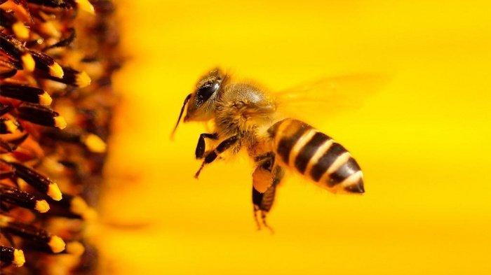 Комар носа не подточит: для чего животные упомянуты в Коране?