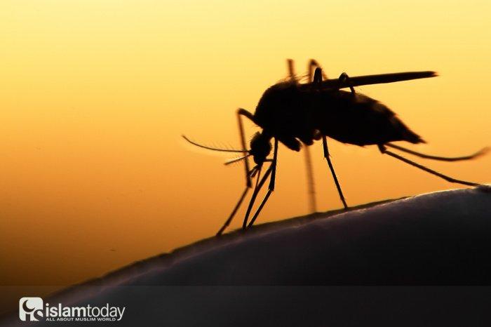 Назидание комара: для чего живые существа помещены в Коран?