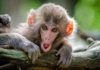 Илон Маск научил обезьяну играть в видеоигры