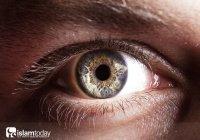 Слепота – непонимание истинности Корана