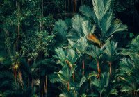 Ученые поведали об опасностях тропических стран