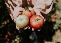 Доказана польза яблок для головного мозга