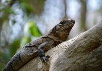 Обнаружен новый древний вид рептилии