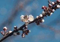 Синоптики рассказали о погоде в марте