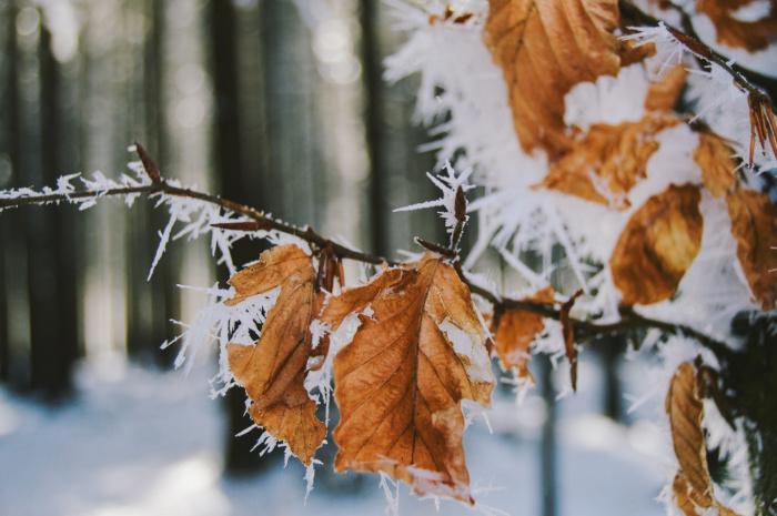 По словам синоптика, в Тверской, Ярославской, Московской и Костромской областях установится аномально холодная погода (Фото: unsplash.com)