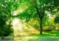 Почему зеленый цвет так любят мусульмане