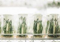Биологи выявили причину болезней растений
