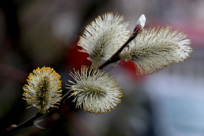 Климатическая весна сдвинется примерно на одну-две недели (Фото: unsplash.com)