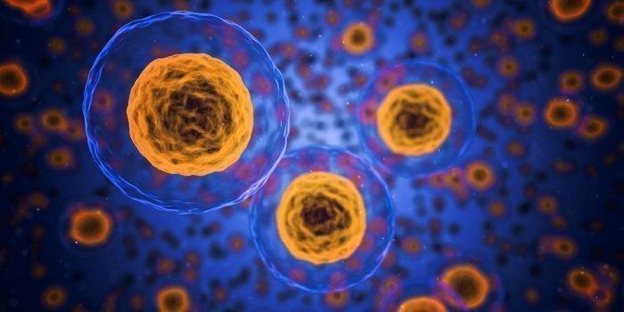 За день в организме человека обновляется около 330 миллиардов новых клеток, а каждую секунду - 3,8 миллионов ( Фото:pixabay.com)