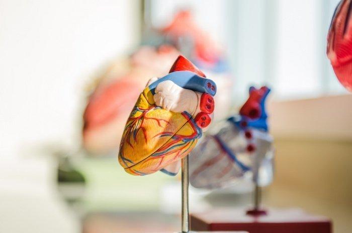 Прокачка крови через закупоренные артерии требует от сердца большего усилия, и потому тело сильнее потеет (Фото: unsplash.com)