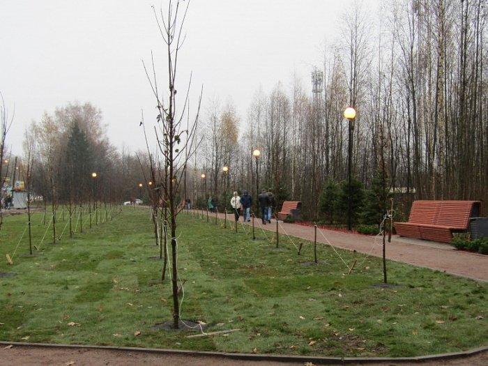 90 тысяч деревьев высадят в Дагестане в память о жертвах войны.
