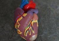Медики предложили три эффективных способа профилактики инфаркта