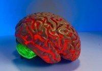 Учёные выявили причину старения мозга