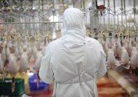 Во Франции запретят халяльный забой птицы
