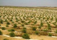 В Саудовской Аравии посадят 10 млрд деревьев