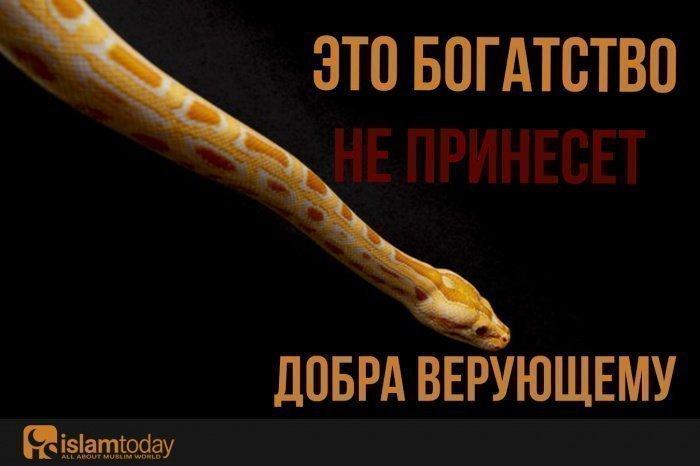 Это богатство не принесет добра верующему (Источник фото: freepik.com).