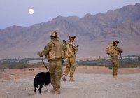 Россия будет готовить кинологов для афганской полиции