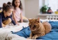 Первая в мире COVID-вакцина для животных зарегистрирована в России