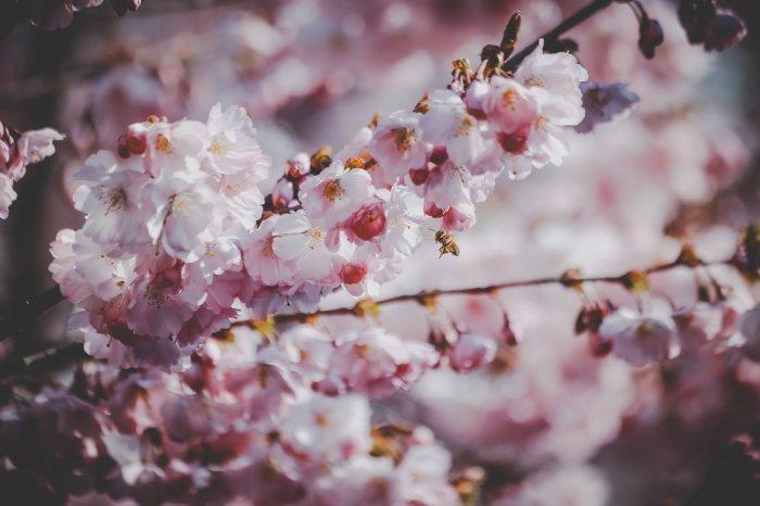 В апреле и мае будет очень тепло (Фото: pexels.com).
