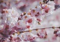 Аллергикам предсказали очень тяжелую весну
