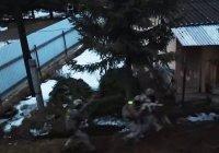 ФСБ публиковала видео операции против боевика ИГИЛ