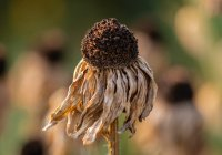 Известны регионы, которым может угрожать летняя засуха