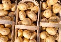 Названа главная ошибка при приготовлении картофеля