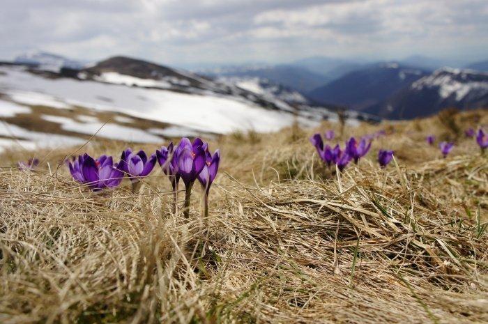 Если температура дневная около 15 градусов, то наступает уже весна (Фото: unsplash.com).