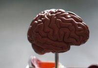 Стало известно, как мозг создает гормон удовольствия