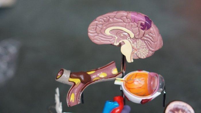 Вовремя диагностировать появившийся тромб тяжело (Фото: unsplash.com).