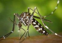 Россиянам предрекли нашествие комаров
