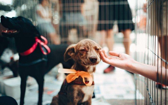 Собачья ревность появляется только при виде взаимодействия владельца и предполагаемого соперника (Фото: unsplash.com).