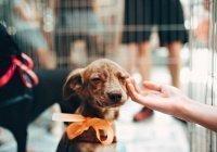 Установлена способность собак ревновать хозяев