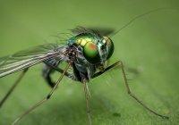 Cтало известно, какая группа крови сильнее «привлекает» комаров